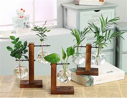 Hydroponic Vases Plant Glass Plants Balancing Growing