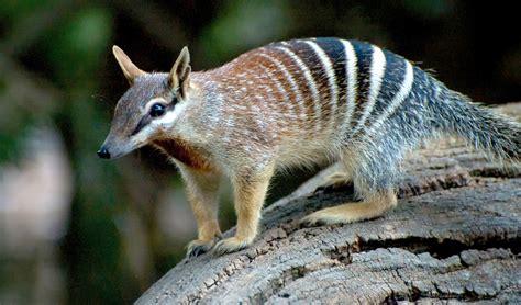 amazing animals  start   letter
