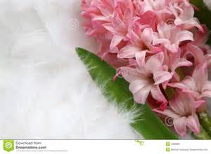 background for a greeting card pink flower on plumage stock image image 1968881