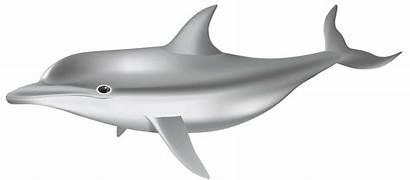 Dolphin Transparent Clip Clipart Underwater Dauphin Dauphins