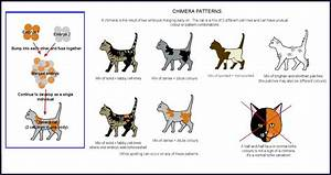 30 How Do Cats Mate Diagram