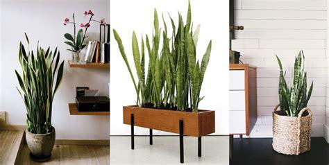 Trova una vasta selezione di piante finte pendenti a prezzi vantaggiosi su ebay. Arredare con le piante - Architettura e design a Roma ...