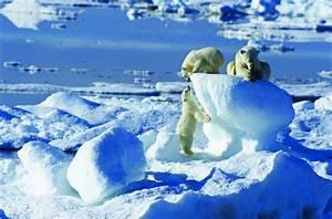 Arctic Cruise and Polar Bear tour to Spitsbergen ...  Arctic