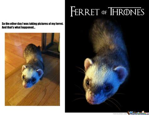Ferret Meme - ferret of thrones by sylfaenn meme center