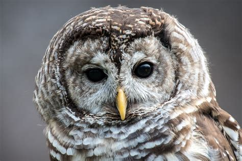 Birds of Prey - Howell (MI) Nature Center