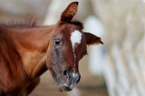 anschaffung pferd