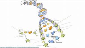 Dna Structure And The Reverse Complement Operation