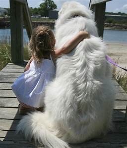 large dog breeds are gentle giants