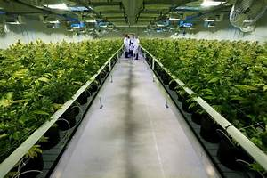 Canada: World's biggest licensed cannabis facility gets ...