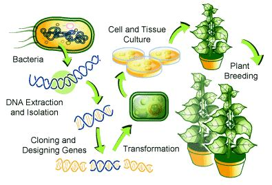 genetically modified organisms agricultural biotechnology