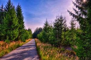 Asphalt, Road, In, Spruce, Tree, Forest, At, Summer, Day, Sunlight, Sun, Stock, Image