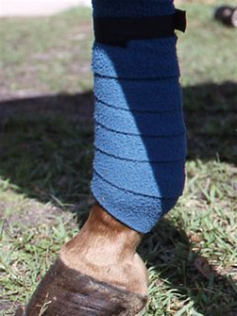 leg protection  horses expert advice  horse care