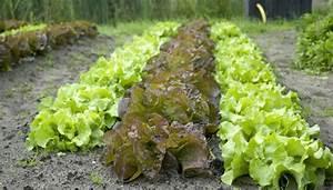 Crop Plant Identification