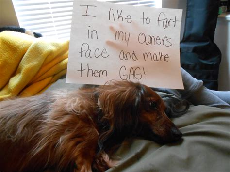 Stinky Farting Dog