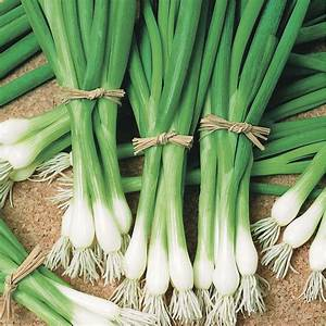 Warrior Bunching Onion Seeds From Park Seed
