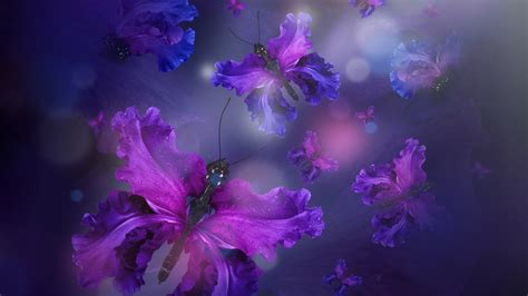 iris wallpapers  background images stmednet