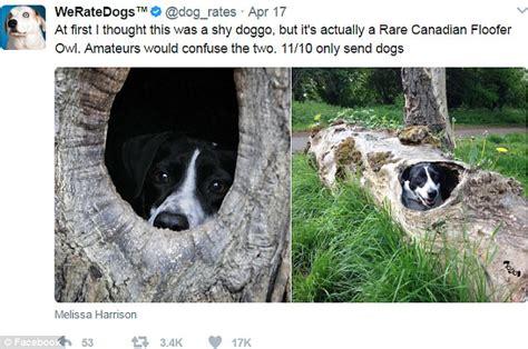speak doggo researchers reveal   language