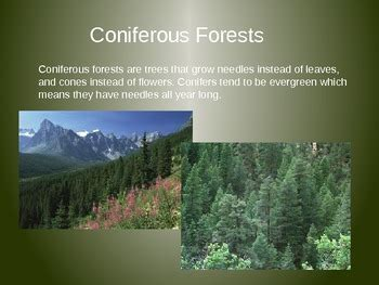 coniferous  deciduous trees powerpoint  city teacher