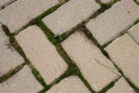 how to prevent growth on a brick paver patio or