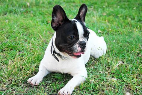 You'll find the best auto insurance quotes at jupiter auto insurance. Pet Insurance in Jupiter, FL | Animal Medical Center of Jupiter
