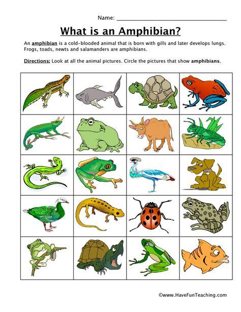 Amphibian Classification Worksheet  Have Fun Teaching