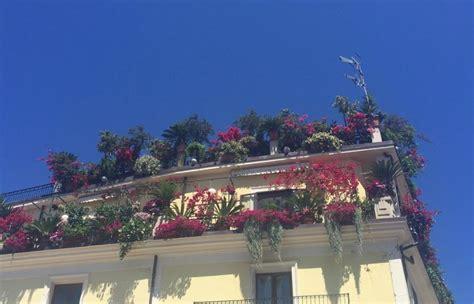 terrazzo e balcone piante e fiori da balcone