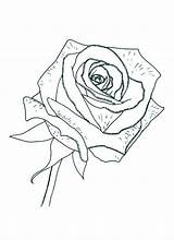 Coloring Rose Pages Printable Sheet Compass Detailed Colornimbus Roses Flower Getdrawings Flowers sketch template