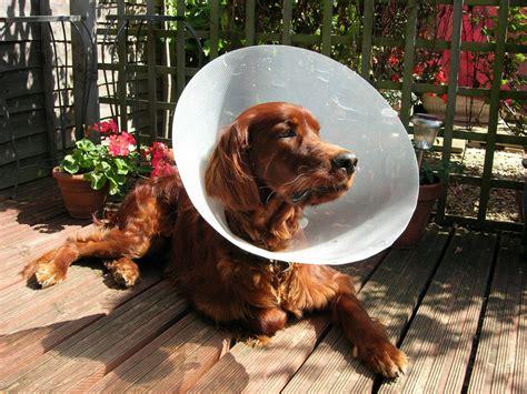 cost  pet care whats   big vet bills