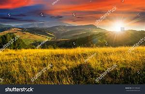 Mountain Summer Landscape. Meadow Meadow With Tall Yellow ...