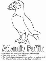Puffin Coloring Newfoundland Drawing Pages Bird Atlantic Canadian Canada Printable Birds Flag Line Template Map Worksheets Geography Drawings Realistic Getdrawings sketch template