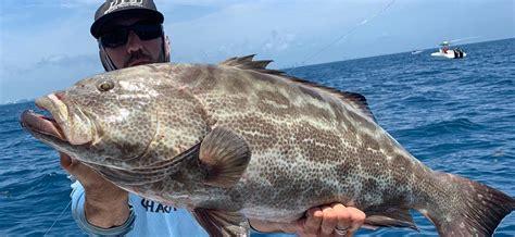 grouper florida fishing fish catch miami epinephelus spp species son season