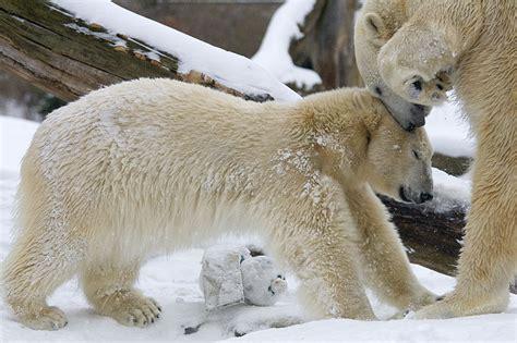 Zoologischer Garten Berlin Winter by Zoologischer Garten Berlin Av Berichte Fotos Und