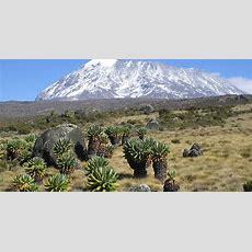 Kilimanjaro National Park  Unesco World Heritage Centre