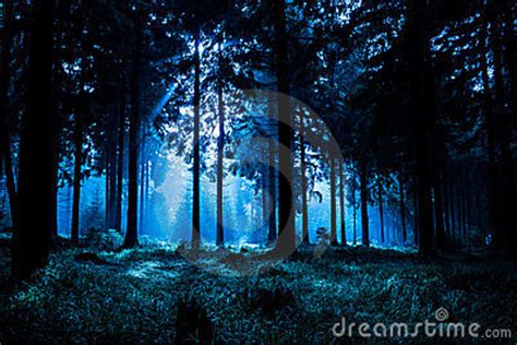 night forest royalty  stock images image