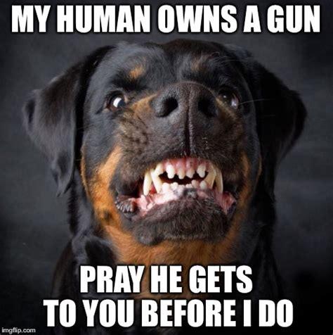 Rottweiler Memes - rottweiler imgflip