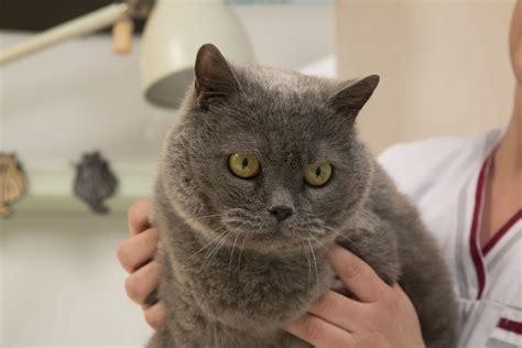 ernaehrung gesundheit haltung katzen