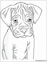 Boxer Puppy Pages Coloring Heart Coloringpagesonly sketch template