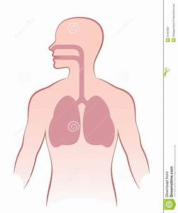 longen anatomie en fysiologie