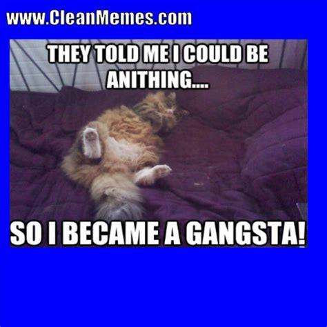 96 Funny Warrior Cat Memes Youtube Die 49 Besten Bilder Von