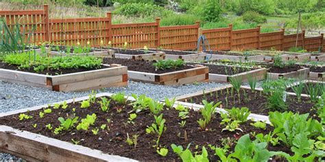 How To Start A Garden In Your Backyard by How To Start A Vegetable Garden Bunnings Warehouse