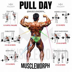 Pull Day Exercise Workout Musclemorph Musclemorphsupps Com Bodybuilding Gym  With Images