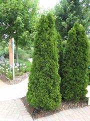 Thuja Smaragd Wachstum : lebensbaum ~ Michelbontemps.com Haus und Dekorationen