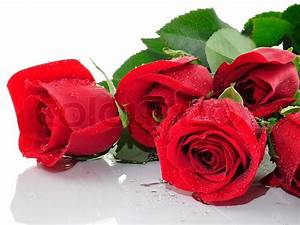 Red roses with water drops , close up | Stock Photo ...