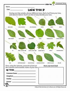 Nc Tree Identification Chart Tree Identification Worksheet In 2020 With Images Tree