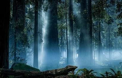 Endor Wars Star Battlefront Forest Rendering Dice