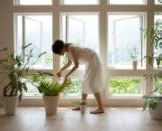 Plantas Que Atraem Boa Sorte | Flores - Cultura Mix