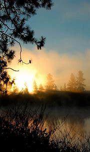 Sunrise Mist Forest Smartphone Wallpapers HD ⋆ GetPhotos