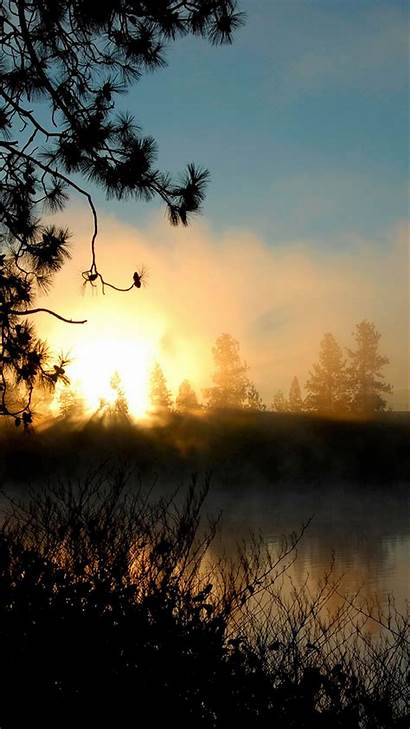 Smartphone Wallpapers Sunrise Forest Mist Getphotos Backgrounds