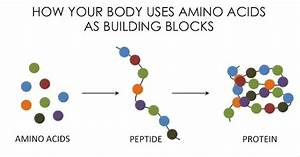 Amino Acids And Proteins  All You Need To Know About Best