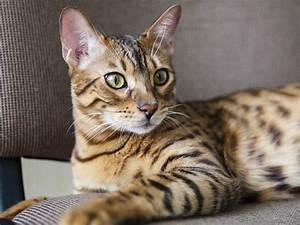 Gemüse Für Katzen : diese katzen sind f r allergiker geeignet liebenswert ~ Watch28wear.com Haus und Dekorationen